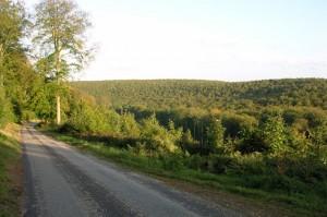 Forêt de Brotonne