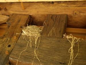 nids d'oiseau