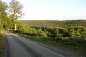 la si belle forêt de Brotonne